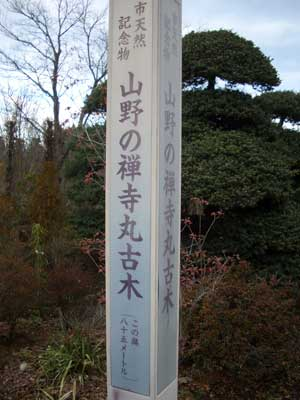 7489_131223yamano